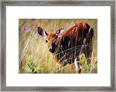 Wary Framed Print by Heather Applegate