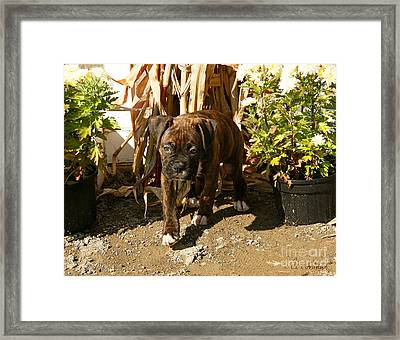 Framed Print featuring the photograph Was I Bad? by Carol Lynn Coronios