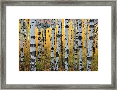 Wasatch Aspens Framed Print by Johnny Adolphson