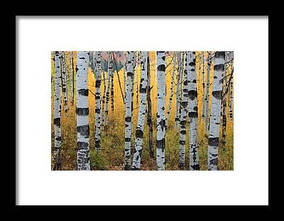 Aspen Framed Prints