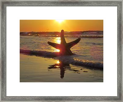 Washed Ashore Framed Print by Nikki McInnes