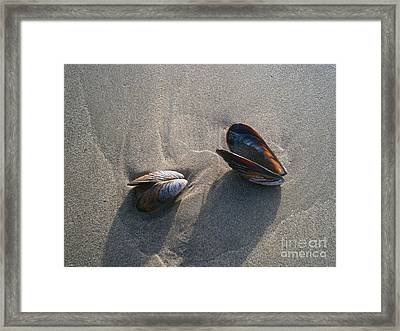 Washed Up Framed Print by Drew Shourd