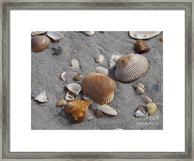 Washed Up On The Beach Framed Print