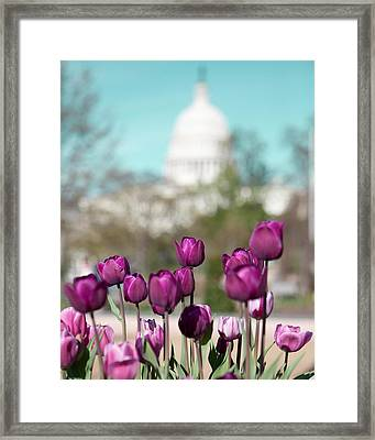 Washington Dc Framed Print by Kim Fearheiley