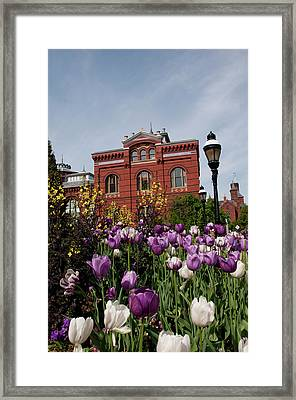 Washington Dc, Tulips At The Smithsonian Framed Print by Lee Foster