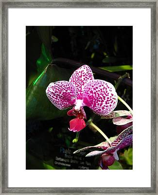 Washington Dc - Us Botanic Garden. - 12121 Framed Print by DC Photographer