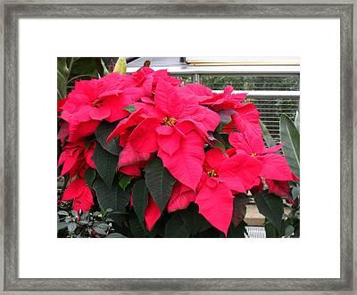 Washington Dc - Us Botanic Garden. - 121210 Framed Print by DC Photographer