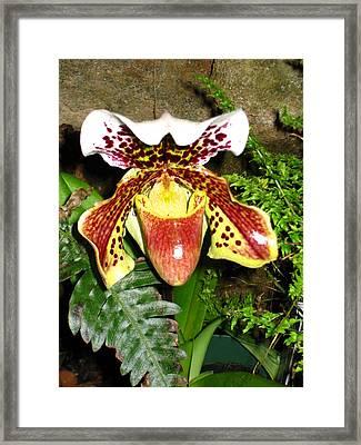 Washington Dc - Us Botanic Garden. - 121216 Framed Print by DC Photographer