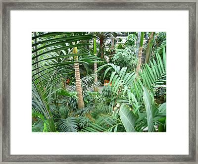 Washington Dc - Us Botanic Garden. - 121223 Framed Print by DC Photographer