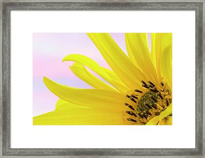 Washington Detail Of Sunflower Blossom Framed Print by Jaynes Gallery