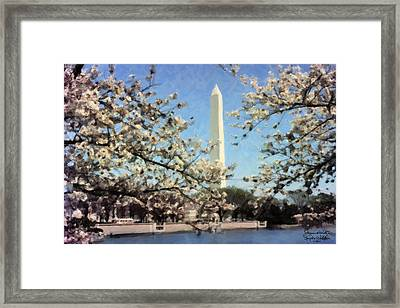 Washington Monument Cherry Blossoms Framed Print by Spyder Webb