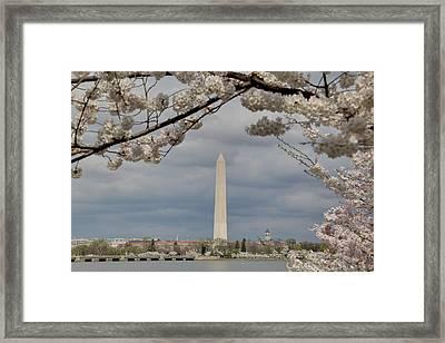 Washington Monument - Cherry Blossoms - Washington Dc - 011325 Framed Print by DC Photographer