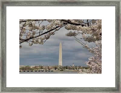 Washington Monument - Cherry Blossoms - Washington Dc - 011326 Framed Print
