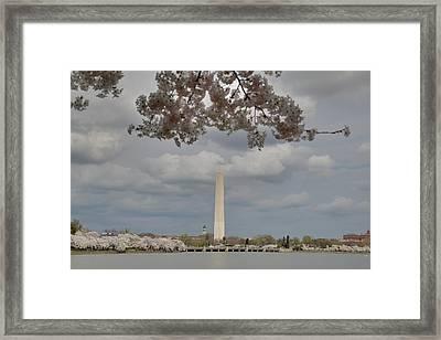 Washington Monument - Cherry Blossoms - Washington Dc - 011329 Framed Print by DC Photographer