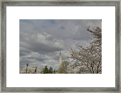 Washington Monument - Cherry Blossoms - Washington Dc - 011334 Framed Print by DC Photographer