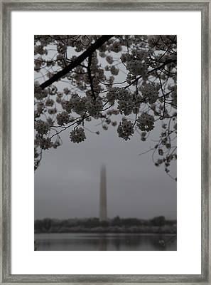 Washington Monument - Cherry Blossoms - Washington Dc - 011337 Framed Print by DC Photographer