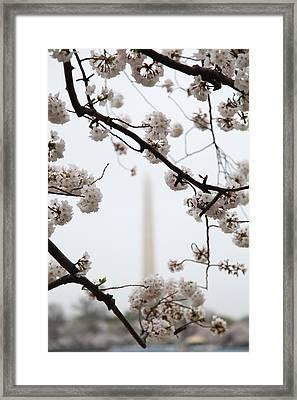 Washington Monument - Cherry Blossoms - Washington Dc - 011341 Framed Print by DC Photographer