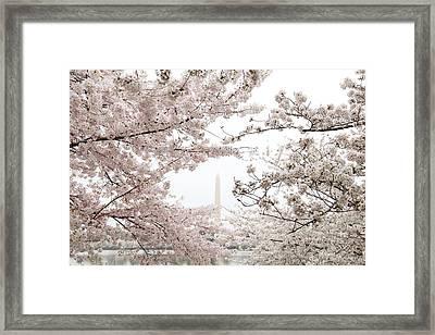 Washington Monument - Cherry Blossoms - Washington Dc - 011343 Framed Print by DC Photographer