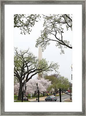 Washington Monument - Cherry Blossoms - Washington Dc - 011346 Framed Print by DC Photographer