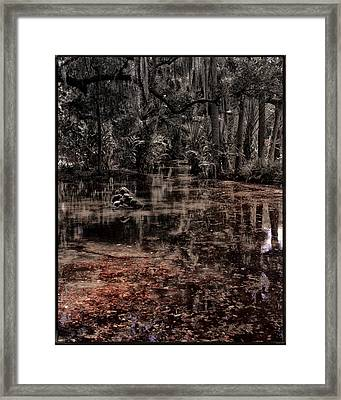 Washington Oaks Framed Print