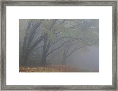 Washington Park Fog 1 Framed Print