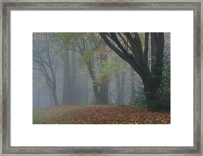 Washington Park Fog 2 Framed Print