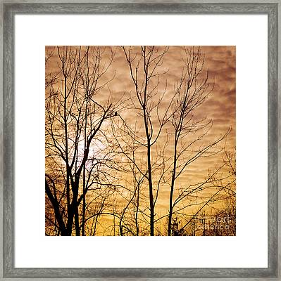 Washington's Winter Sky Framed Print