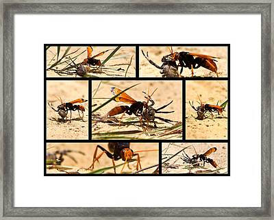 Framed Print featuring the photograph Wasp And His Kill by Miroslava Jurcik