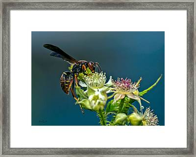 Wasp Framed Print by Bob Orsillo