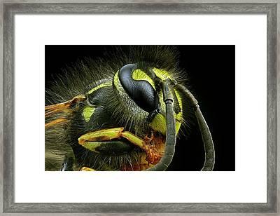 Wasp Head Framed Print