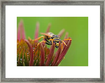 Wasp  Framed Print by Juergen Roth