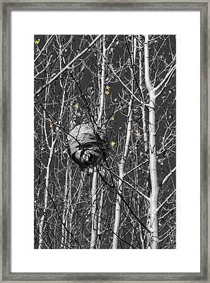 Wasp Nest In Aspen Framed Print