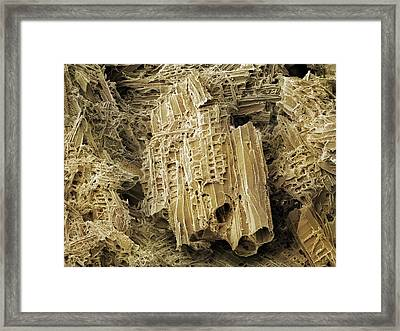 Wasp Nest Material (sem) Framed Print by Science Photo Library
