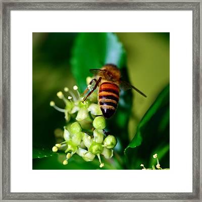 Wasp On Flower Framed Print by Tommytechno Sweden