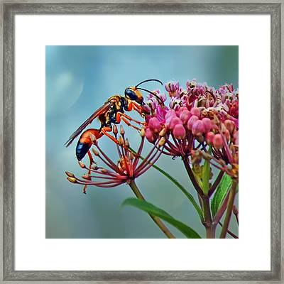 Wasp On Milkweed Framed Print