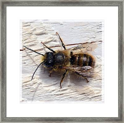 Wasp Posing Framed Print by Tommytechno Sweden