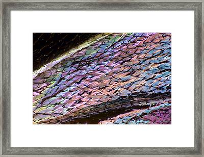 Wasp Wing Framed Print by Science Photo Library