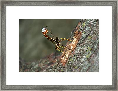 Wasphornet Framed Print by Mark Russell