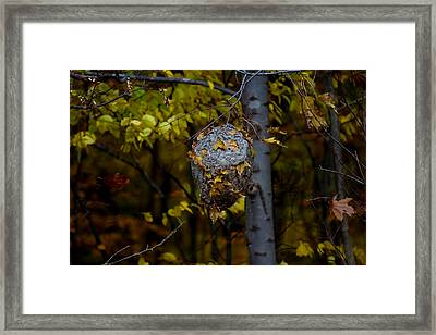 Wasp's Nest Framed Print by Jerome Lynch