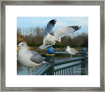 Watch And Learn Framed Print