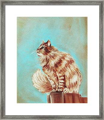 Watch Cat Framed Print by Anastasiya Malakhova