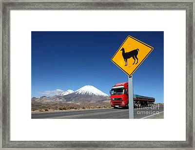 Watch Out For Llamas Framed Print by James Brunker