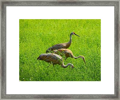 Watch Out Framed Print
