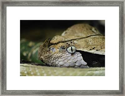 Watch Out  Framed Print by Rachel Barrett