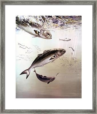 Watch The Bait Framed Print by F Hughes