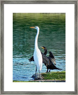 Watch This Framed Print by Deb Halloran