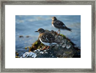 Watchbirds Framed Print