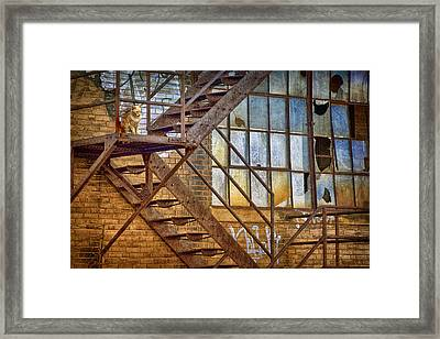Watchcat Framed Print by Nikolyn McDonald