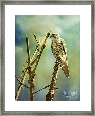 Watcher Of The World Framed Print by Rhonda Strickland