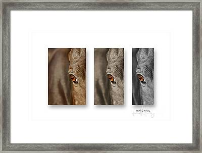 Watchful Triptych Framed Print